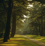The Avenue of trees at Biddulph Grange