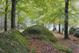 Woodland area on the shores of Grasmere, Lake District, Cumbria
