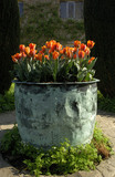 "Tulipa ""Prinses Irene"" in a copper planter in the Cottage Garden at Sissinghurst Castle Garden, Kent, in May"