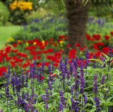A close view of a colourful herbaceous border in the Walled Garden at Calke Abbey
