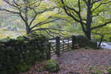Drystone wall and gate amongst woodland area on the shores of Grasmere, Lake District, Cumbria