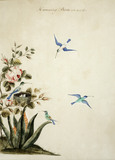 Humming Birds of the Size of Life, Late 18th Century