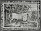 The Chillingham Bull, Engraving by Thomas Bewick, 1789