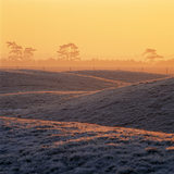 View of the burial mounds at dawn in Sutton Hoo