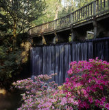 Bridge and waterfall in Spring at Bodnant Garden