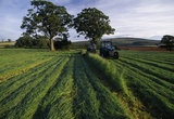Cutting grass for silage on the Holnicote Estate