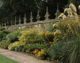 The West Court North Wall border at Hardwick Hall showing Yellows graced by Cortaderia Fulvia [Pampas Grass]