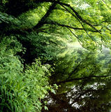 An idyllic tree bordered pond with the surrounding vegetation reflected in the still waters