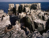 View of the pinnacles of South Island in the Farne Islands