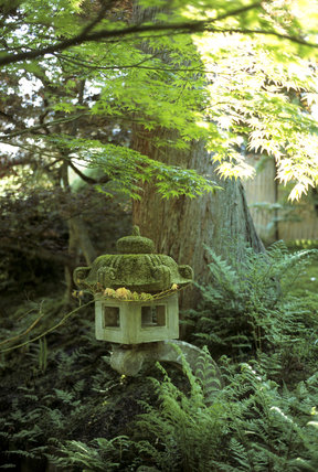 A stone lantern in the Japanese Garden at Tatton Park surrounded by Ferns and Acers