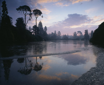 A view taken at Sheffield Park Garden at early dawn, with the sky casting a purple/pink hue over the lake and trees