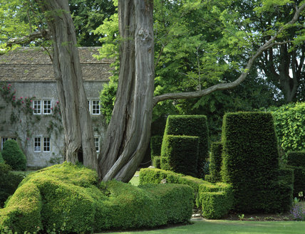 The Courts, sunlight on the clipped hedges in the garden with a large tree in the foreground