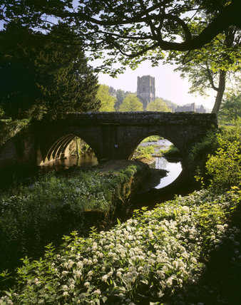 Fountains Abbey and Tower in distance, with bridge over River Skell