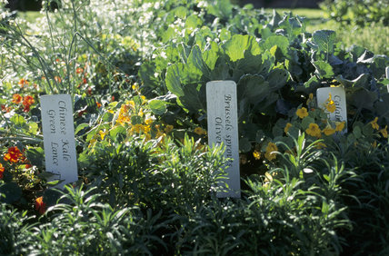 A close up of labels marking the different vegetables in the Kitchen Garden at Clumber Park