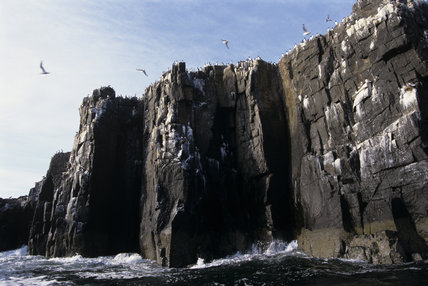 The cliffs of the Farne Islands rising straight up from the sea