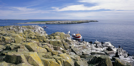 Boats coming and going with visitors to the Farne Islands