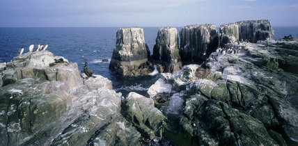 Unusual rock formations on the Farne Islands