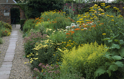 The Garden at Gunby Hall, a border with yellow daisies