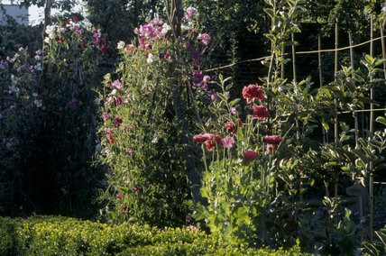 A view of the flower borders leading to the Kitchen Garden at Fenton House