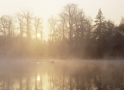 A swan is floating on the misty lake on a winter day