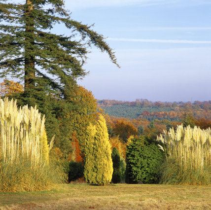 Looking out from the Pinetum at Nymans, across the Sussex Weald, with the many trees in varied hues and pampas grass prominent in the foreground