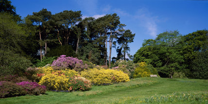 Varying shades of azaleas in a border at Rowallane Garden, with the last of the daffodils growing in the grass in the foreground