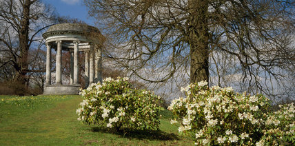 The Rotunda on a hillside with a clump of daffodils and rhododendron bushes in the foreground at Petworth House