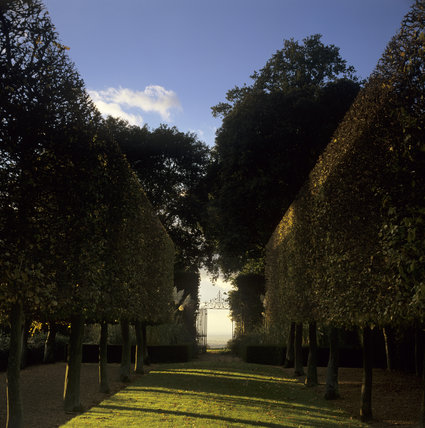 An early morning scene, at Hidcote, with a shadowy tree lined avenue, leading to an iron gateway silhouetted against the bright sky