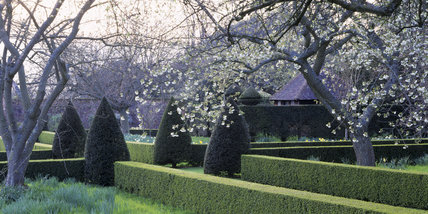 View of the cherry blossom and topiary in the Orchard of Hinton Ampner Garden