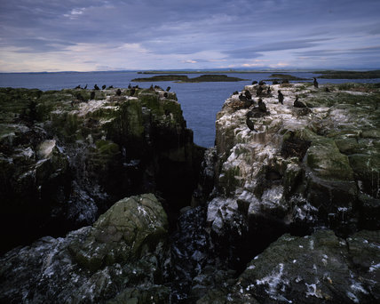 View of Shag Gulley at Longstone End on the Farne Islands, looking towards the inner islands and mainland