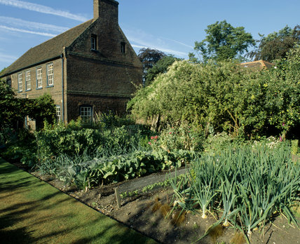Vegetables in the Kitchen Garden at Fenton House, London