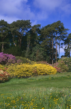 The Spring Ground at Rowallane which contains many exotic species from around the world, particularly azaleas and rhododendrons and a notable rock garden