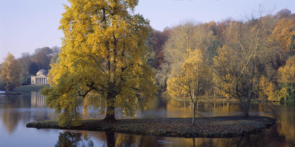 Partial shade slightly subdues the yellow autumn colour of the Liriodendron tulipifera (tulip tree) planted on an island in the lake at Stourhead