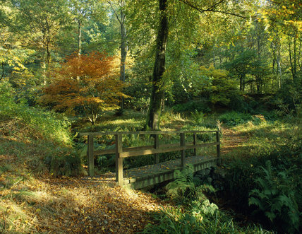 A rustic bridge across a stream in Stagshaw Garden