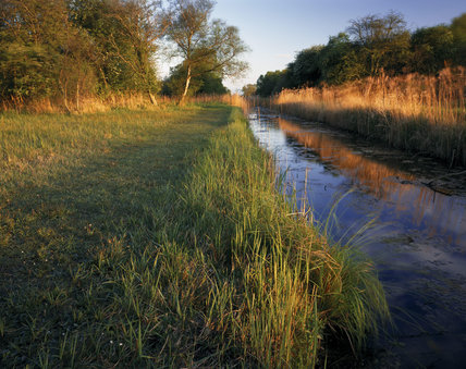 A view of Drainer's Dyke, which is probably the oldest to run across the Sedge Fen, Wicken Fen, Cambs