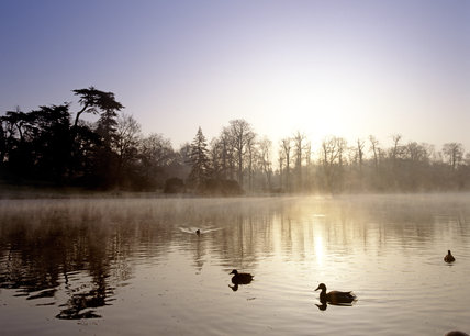 Ducks in silhouette swimming on the mist shrouded lake at Claremont Landscape Garden at dawn