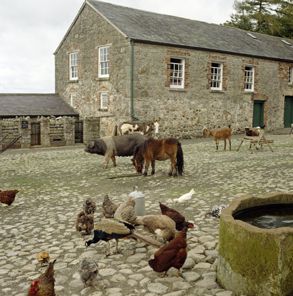 The farmyard at Ardress House in Ireland, showing chickens, a peacock, a pig, a Shetland pony and a goat amongst other animals pottering about in the cobbles