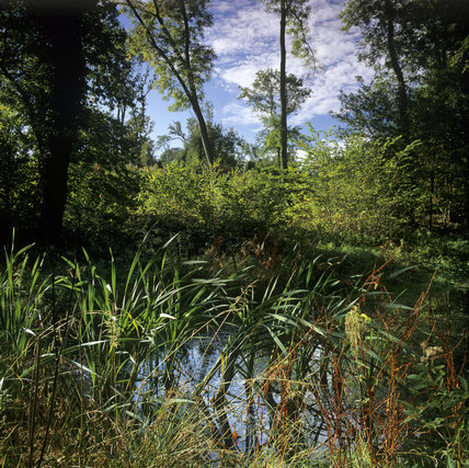 Reeds and grasses surrounding water in Leigh Woods