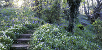 The area known as Newfoundland in Coleton Fishacre Garden, with bluebells, campion and wild garlic (?)