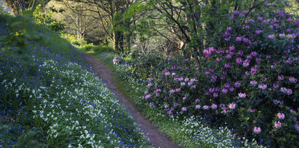 A path in the Bluebell Wood in Coleton Fishacre Garden