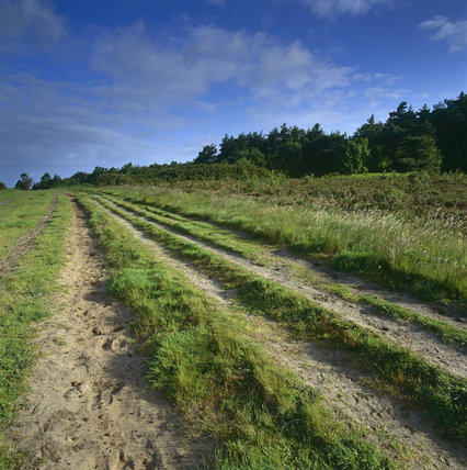 Deep ruts across part of the open grassland of Ludshott Common caused by vehicles and also used partly by horse riders, but much of the area is covered by heather, gorse, ferns and trees
