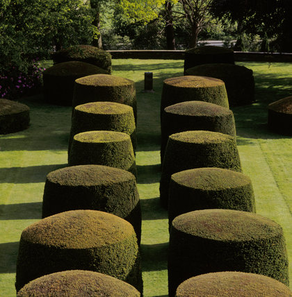 The yew topiary on the Lower Lawn at Wightwick Manor