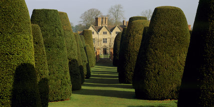 A line of neatly cut yew trees with a view of the house beyond in the garden at Packwood House