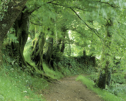 Woods near the start of the Main Walk in Lydford Gorge, close to the Office and Shop