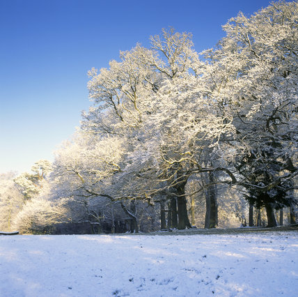 Winter on Box Hill, the ground & trees under a coating of snow