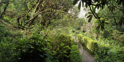 Panoramic view of the path from the Fernery with box hedging in the garden at Greenway