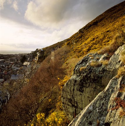The gorse-covered cliffs of Dinas Oleu, rising behind Barmouth