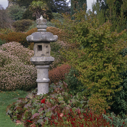A view of the Heather Garden with Acer and Bergenia plants