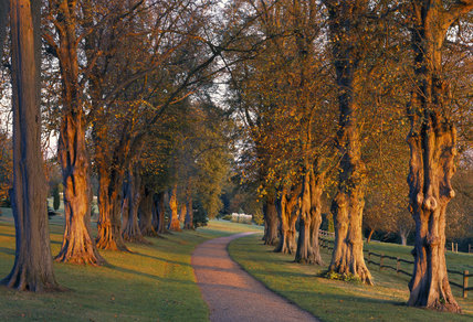 The Lime Avenue woodland, which contains tree of mainly oak, sweet chestnut and beech