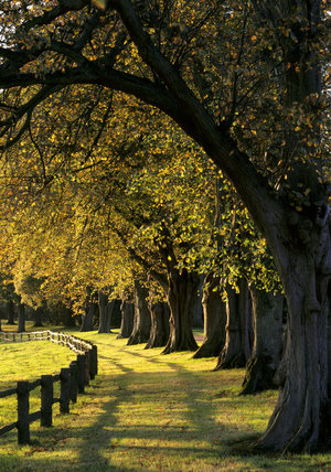 The Lime Avenue woodland, which contains trees of mainly oak, sweet chestnut and beech